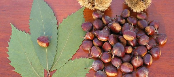 Chestnuts and Chestnut leaf